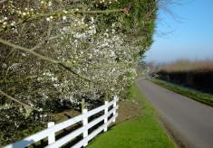 Hareway Lane