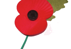 World War 1 Dead