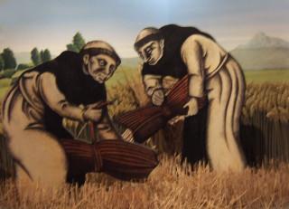 Friars harvesting